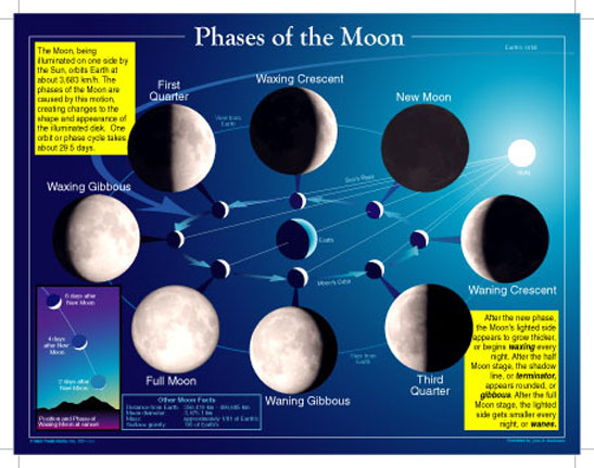 pictures of moon phases in order. moon phases in order